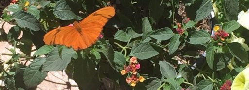 Butterflies and Wildflowers – Spring Blooms in the Sonoran Desert