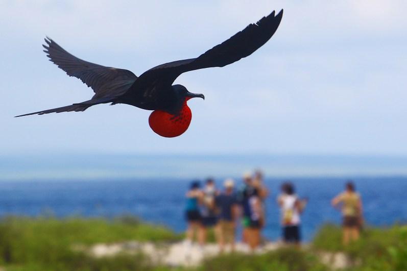 Galápagos_39