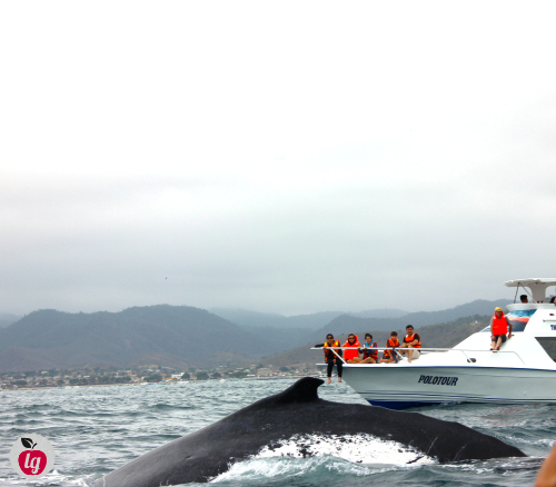 whale watching in Ecuador 2
