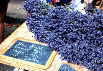 lavender in provencal market