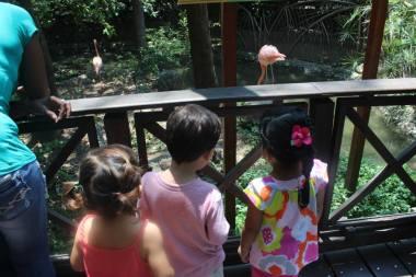 flamingo-watching-Parque-Historico