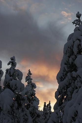snowy_scene