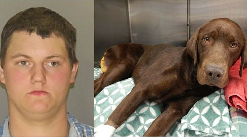 Man Arrested for Botched Home Neutering Attempt