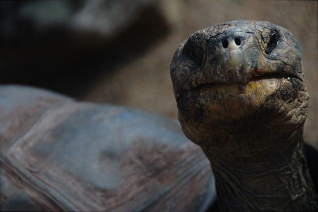 Turtle - reptiles are one of the species most commonly traded online.