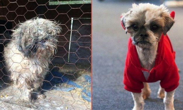 Video 'Confessions' of Dog Rescued from Wire Cage Behind Junk Pile