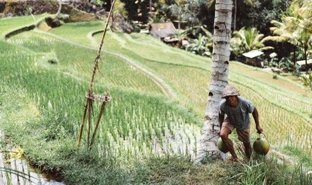Man working in rice field