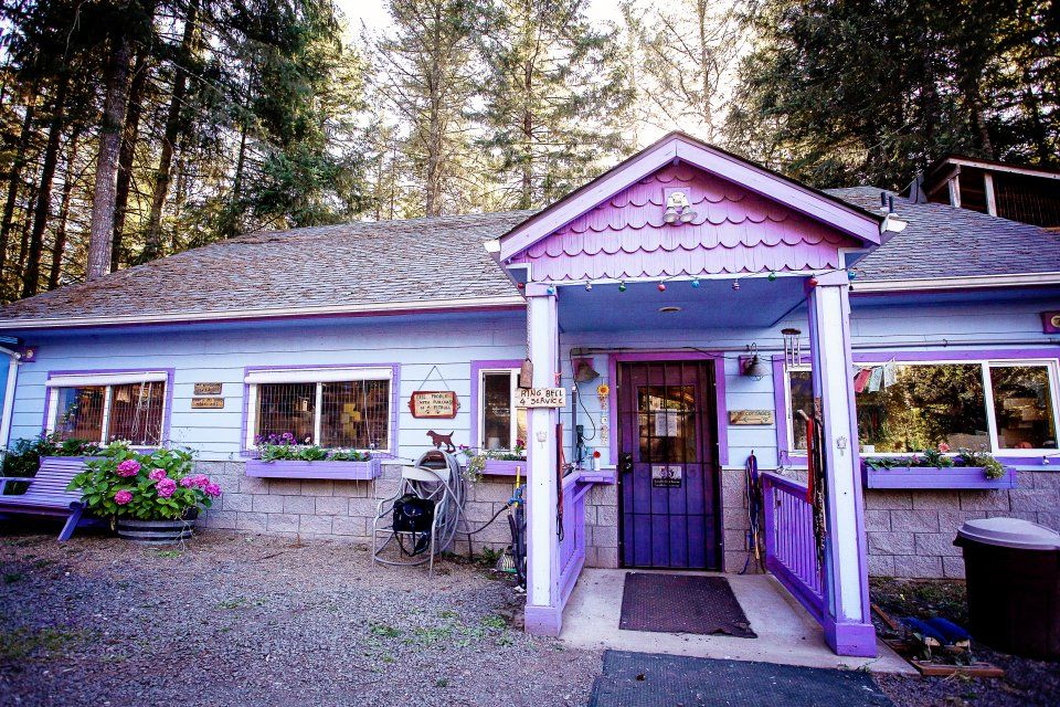At This Dog Rescue, Every Animal Gets a Comfy Cottage, Not a Cage