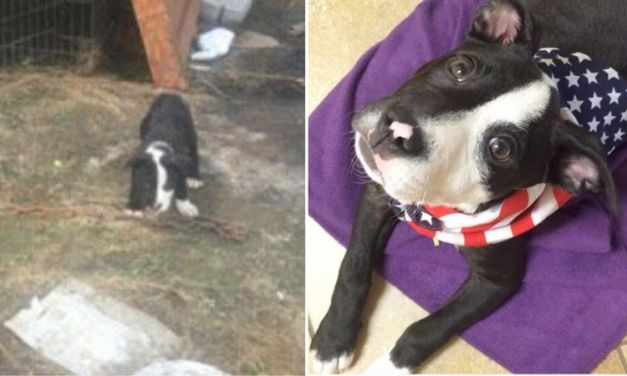 Before and After: Tiny Rescue Dogs Make Amazing Transformation
