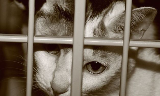 'Pet Lover' Caught Slaughtering 100 Animals a Night to Sell Cat Meat