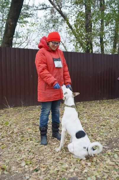 Rescue dog outside in the Ukraine, where a shelter risks losing electricity.