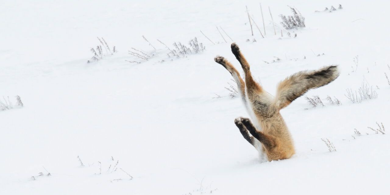 Here are the Winners of The 2016 Comedy Wildlife Photography Awards!