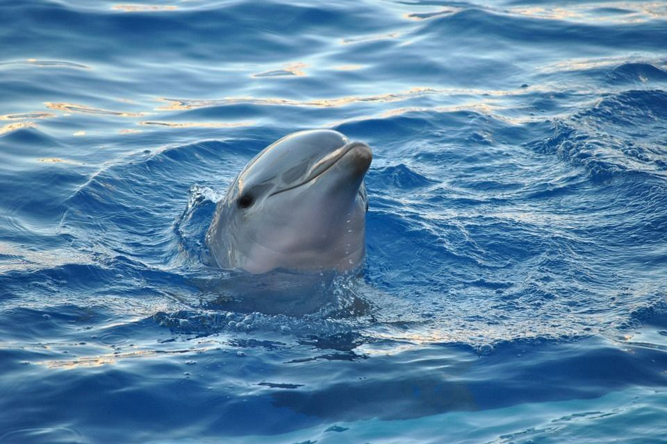 Another Baby Dolphin Dies for Tourist Selfies