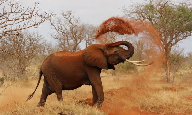 Huge Win for the Elephants: China to Ban All Domestic Ivory Sale