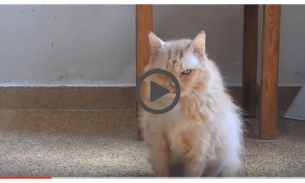 Sad, Abused 17-Year-Old Cat Finds a Home – and Finally, Love