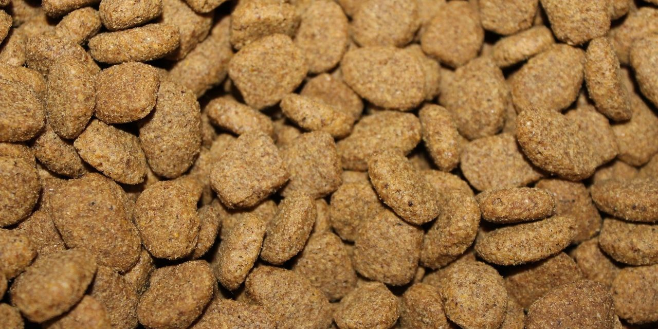 Are There Gruesome Ingredients In Your Pet's Food?