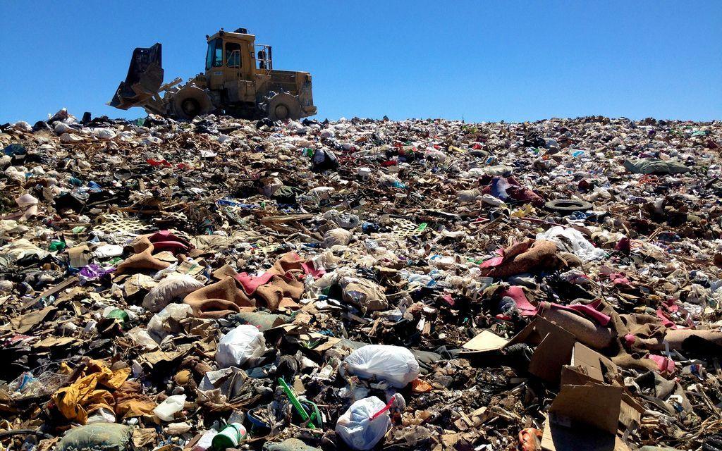 Foam Cups & Elephants: the Longevity of Garbage