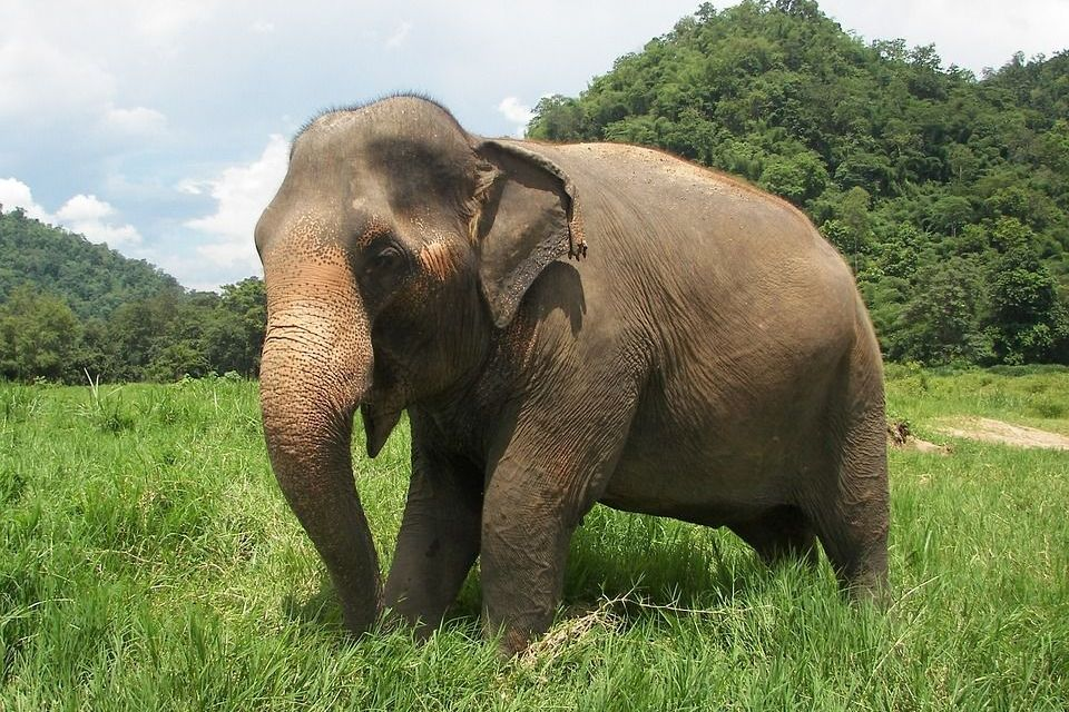This Study Proves Again that Elephants are Really, Really Smart