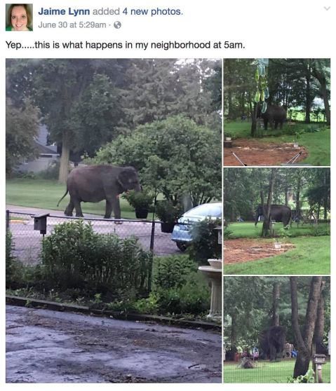 Elephant escapes from Circus World in Baraboo, WI