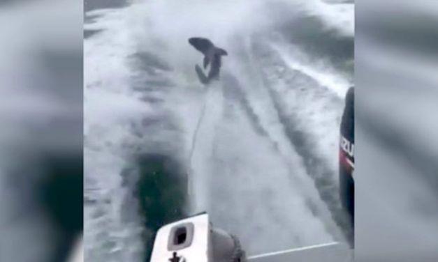 Video: Fishermen Brutally Drag Shark Behind Speedboat for Fun