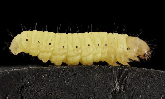 These Amazing Caterpillars Actually Eat Your Plastic Garbage