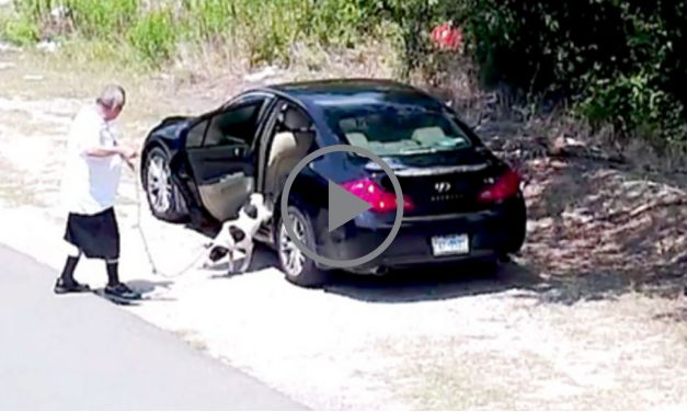 VIDEO: Hidden Camera at Dog Dumping Site Leads to First Arrest