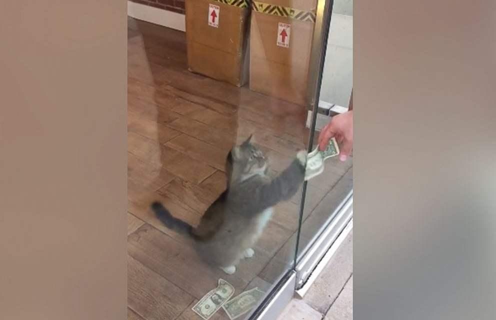 This Cash-Grabbing Kitty is Raising Money for the Homeless
