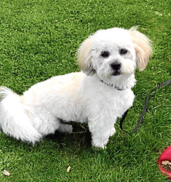 Tiny Puppy Hailed 'Hero' After Scaring Away Burglar