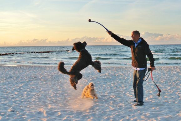 Man playing fetch with a dog on the beach.