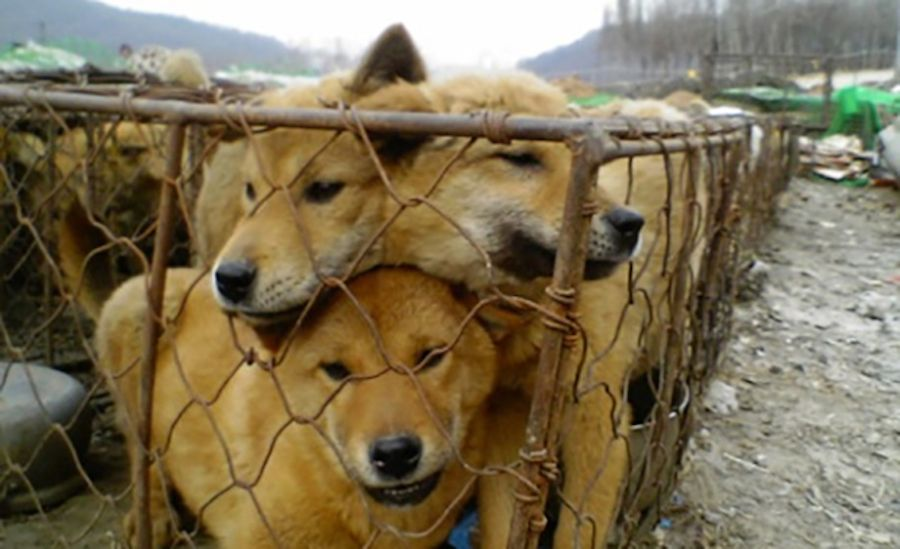 Sign: Ban Korea's Brutal Dog Meat Trade