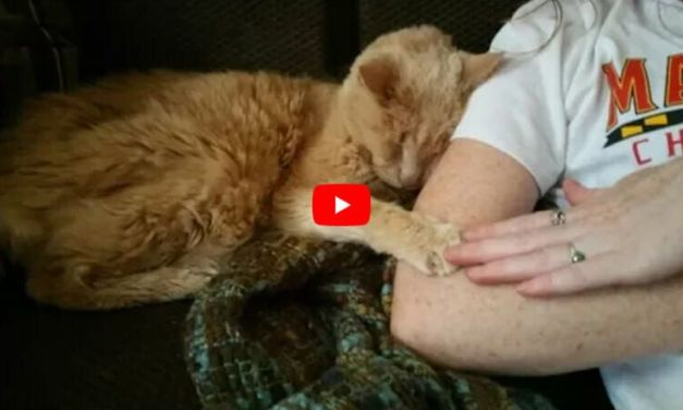 VIDEO: Couple Adopts 21-Year-Old Cat Abandoned at Vet, Gives Him the Life He Deserves