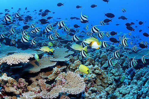 hawaii coral reef pacific ocean