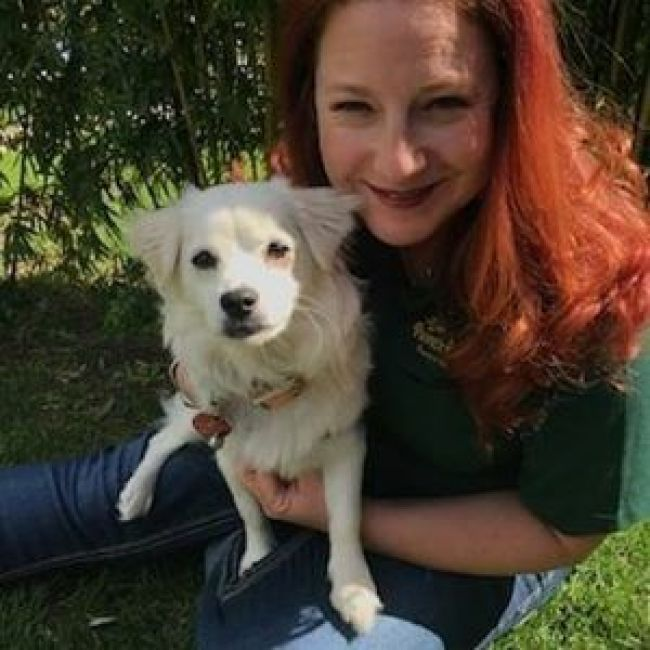 dog rescued from dog meat