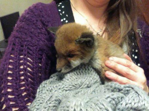fox cub rescue
