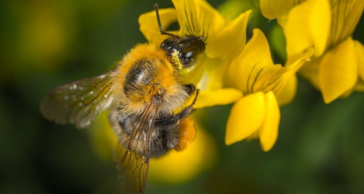 Bee-harming Pesticides Banned by the EU