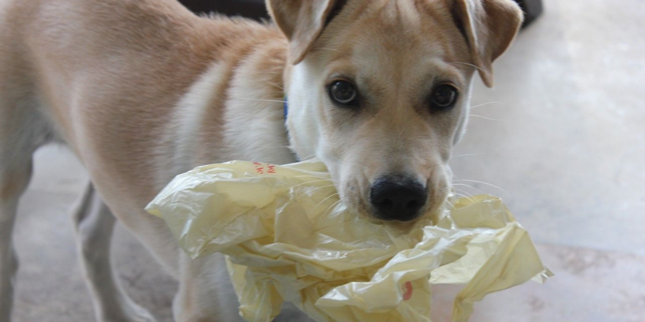 Dog Dies of Suffocation in Potato Chip Bag – Is Your Pet At Risk?