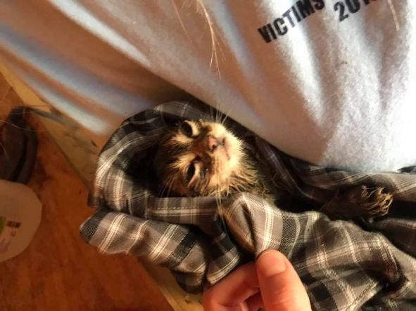 kitten rescued from well