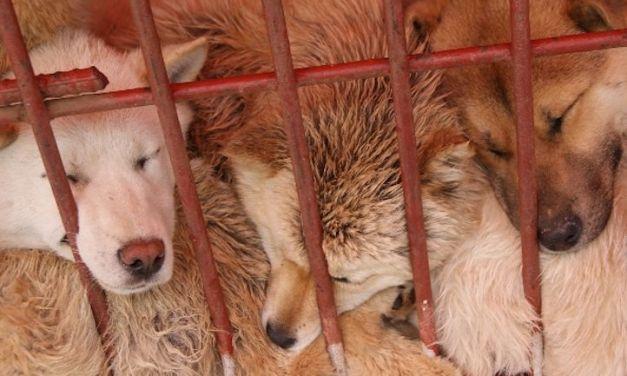 SIGN: Shut Down Moran Market Dog Meat Vendor for Good
