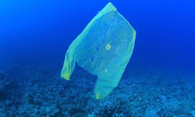 Our Plastic Trash Has Infiltrated the Deepest Part of the Ocean