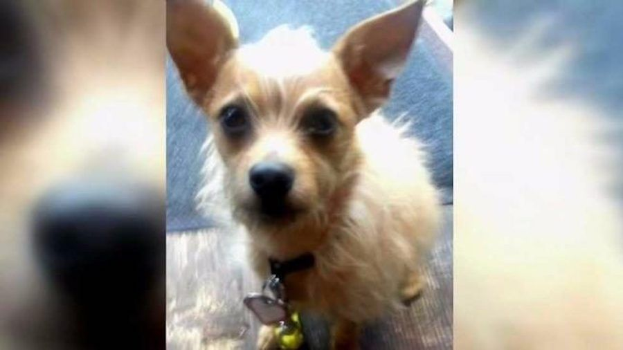 SIGN: Justice for Puppet, Tiny Dog Brutally Kicked to Death by Stranger