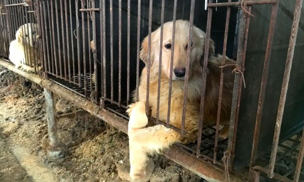 Sign S. Korea's Official Government Petitions to Help Ban Dog Meat For Good