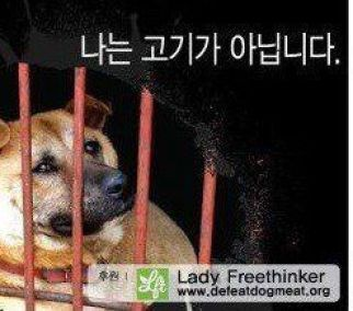Dog meat in S. Korea