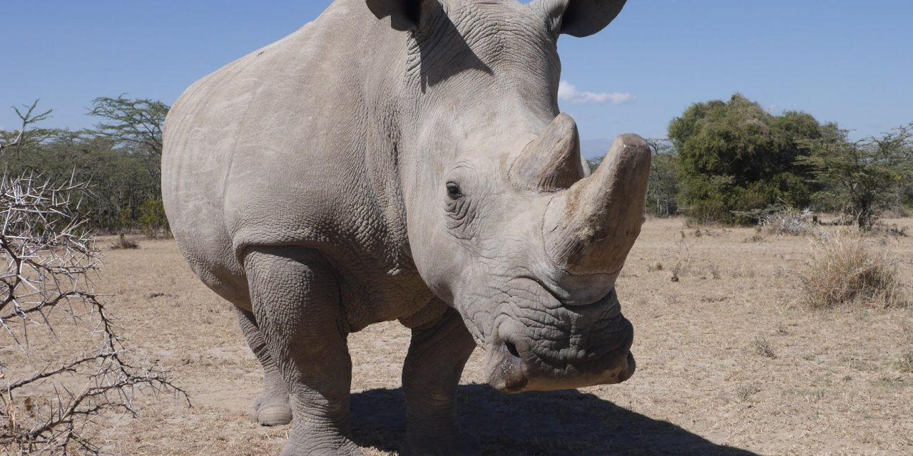 Rhino Poachers Sentenced to More than 15 Years in Prison