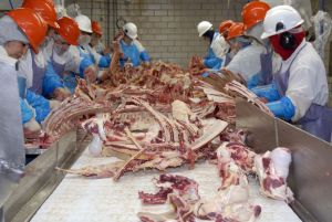 Slaughterhouse workers face serious injuries