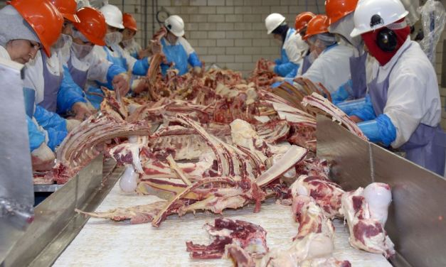 Factory Slaughterhouse Workers in America Suffer 2 Amputations a Week