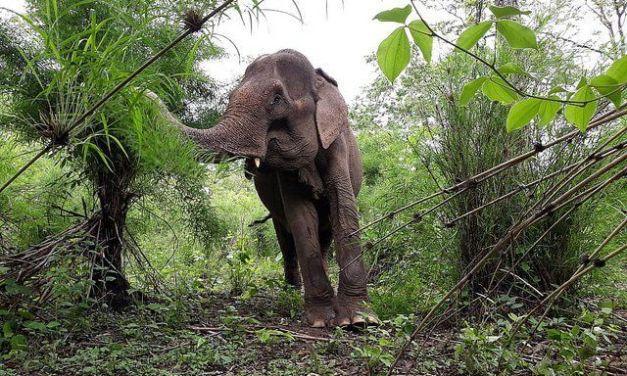 Vietnam Takes Giant Step Towards Elephant-Friendly Tourism
