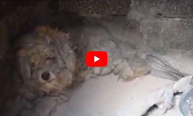 VIDEO: 'Miracle' Dog Survives Greece Fire by Hiding in Oven