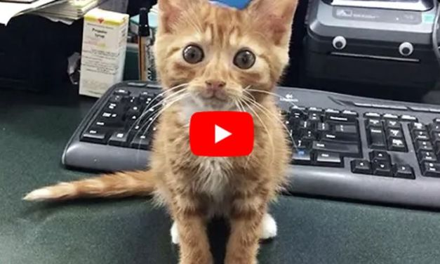 VIDEO: Kitten Who Couldn't Grow Has A Family That Loves Him Just the Way He Is