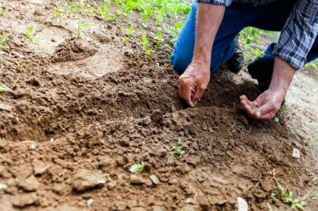 agriculture planting seeds tree planting