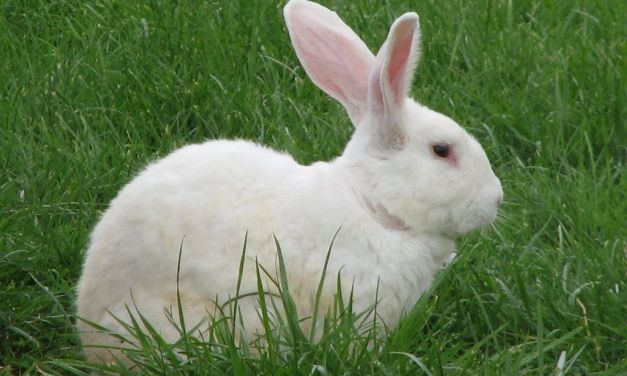 Cruelty Free Cosmetics Act Unanimously Passed in California Assembly