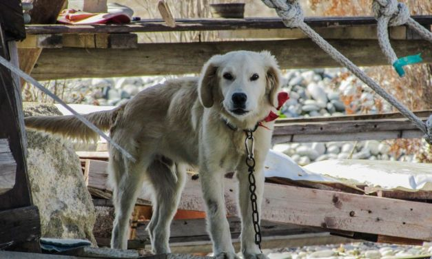 Victory! It Is Now Illegal to Keep a Dog On a Chain in Malta